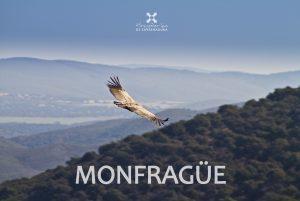 monfrague-birdwatching